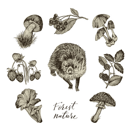 Set of forest nature objects. Plants and animals. Botanical illustration in vintage style