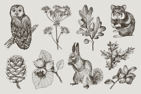 Collection of highly detailed hand drawn owl, hamster, squirrel, acorns, fir branch, berries, pine cone, hazelnut isolated on background. Vector design Reklamní fotografie - 114552349