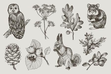 Sammlung von hochdetaillierter handgezeichneter Eule, Hamster, Eichhörnchen, Eicheln, Tannenzweig, Beeren, Tannenzapfen, Haselnuss einzeln auf Hintergrund. Vektordesign