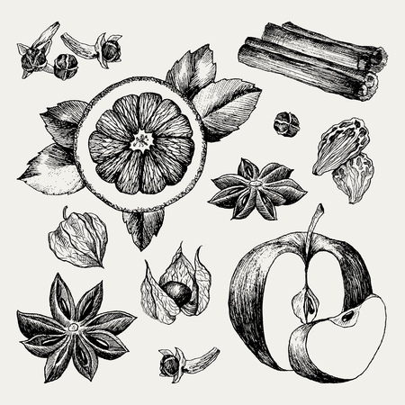 Mulled Wine and spices, orange, apple, cinnamon, carnation, anise, berry, clove, physalis. Hand drawn vector Illustration. Set in sketch style. Classical winter drink. Ilustração