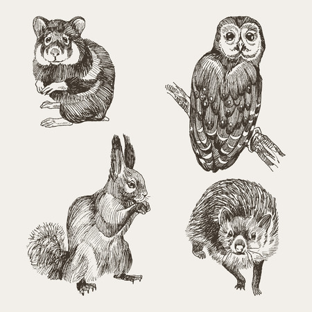 Collection of forest mammal. Vintage sketch illustration in retro style