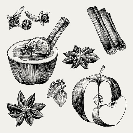 Vector collection of vintage hand drawn mulled wine and spices illustrations isolated on white Ilustração