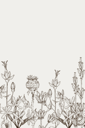 Medical herbs and plants Isolated on white background series. Vector illustration. Art sketch. Hand drawing object of nature. Vintage engraving style.