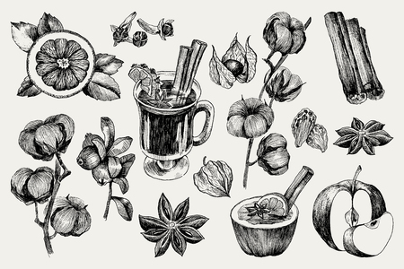 Vector collection of vintage hand drawn mulled wine and spices illustrations isolated on white Illustration