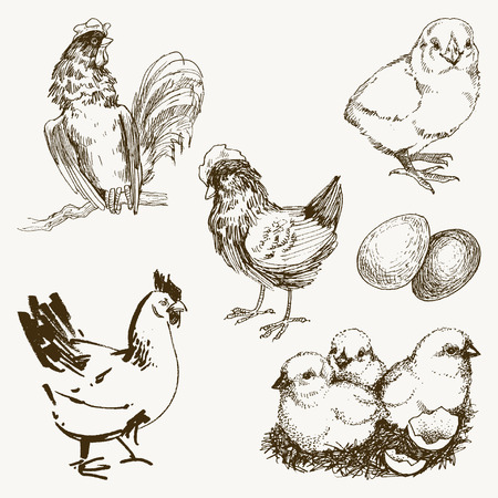 Chicken and chick, chickens, hand drawn chicken, chicken farm, vector illustration sketch Ilustração