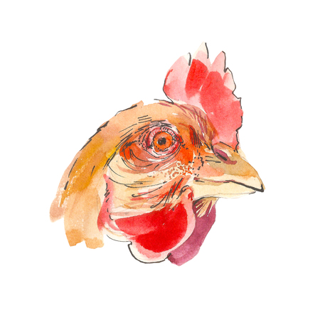 Rooster portrait watercolor illustration isolated on a white background. Hand drawing farm bird head
