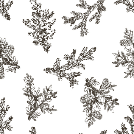 Vector seamless pattern with pine branches. Forest repeating texture. Floral background. Zdjęcie Seryjne - 127315403