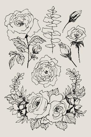 Wild roses blossom branch isolated. Vintage botanical hand drawn illustration. Spring flowers of garden rose, dog rose. Vector design Illusztráció