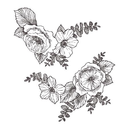 Wild roses blossom branch isolated. Vintage botanical hand drawn illustration. Spring flowers of garden rose, dog rose. Vector design 向量圖像