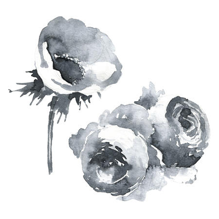 Anemone and roses isolated illustration, classic floral objects for web and print. Watercolor hand drawing. Romantic design for natural cosmetics, perfume, women products. Can be used as greeting card or wedding background 版權商用圖片 - 127313588