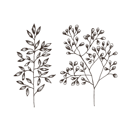 Wild and herbs plants set. Botanical hand drawn sketch. Spring flowers. Vector design. Can use for greeting cards, wedding invitations, patterns. Ilustração