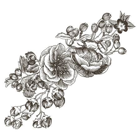 Wild roses blossom branch isolated on white. Vintage botanical hand drawn illustration. Vector design. Can use for greeting cards, wedding invitations, patterns. Ilustração