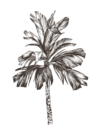 Vector Illustration of palm tree sketch for design, website, background, banner. Hand Drawing floral on beach. Travel and vacation ink element template. Isolated on white Vetores