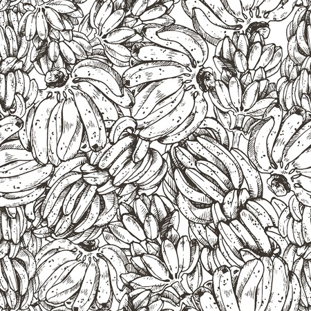 Banana palm and fruit graphic branch black white isolated sketch illustration vector