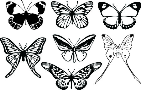 The black-and-white butterflys on a white background. The vector drawing Illustration