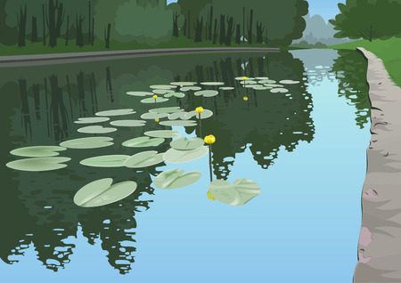 dense: Yellow lilies in a pond on a background of dense forest.