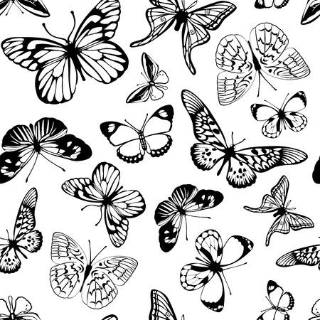 白地に蝶の黒。