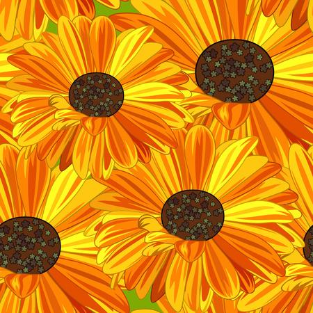 calendula flower: Yellow and Orange Daisy Seamless Background.