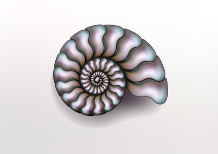 Realistic vector picture of Ammonite Nacre color on light background, pearly, pure and airy.