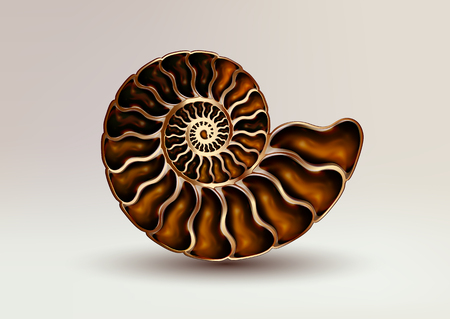 Realistic vector picture fossil Ammonite Nacre color on light background. Çizim