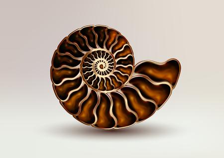 Realistische vector afbeelding fossiele Ammonite Nacre kleur op lichte achtergrond. Vector Illustratie