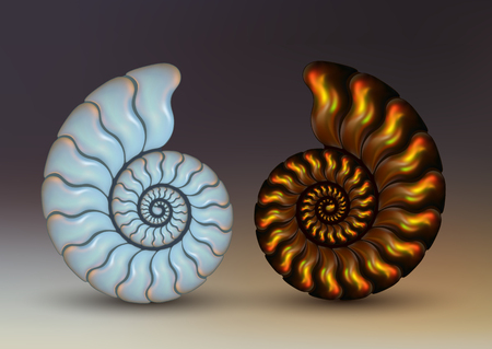 Realistic vector picture two fossil Ammonites Nacre and golden brown iridescent color on dark background. pearly, pure and airy.