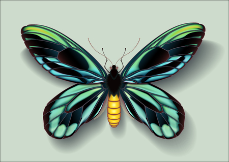 Realistic picture butterfly Ornithoptera alexandrae on green background casting off a shadow