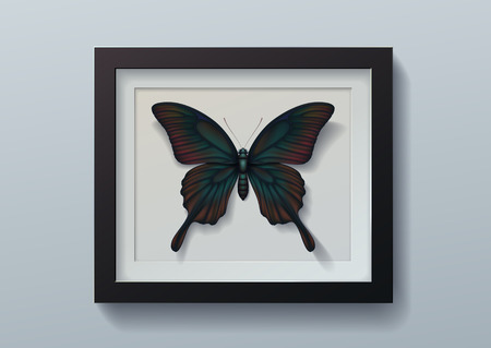 Realistic picture of butterfly Papilio memnon in black frame on light background