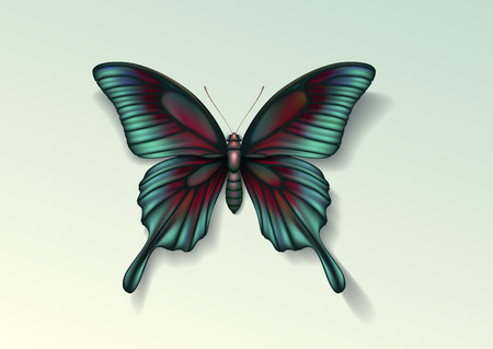 Realistic vector picture butterfly Papilio maackii on light background