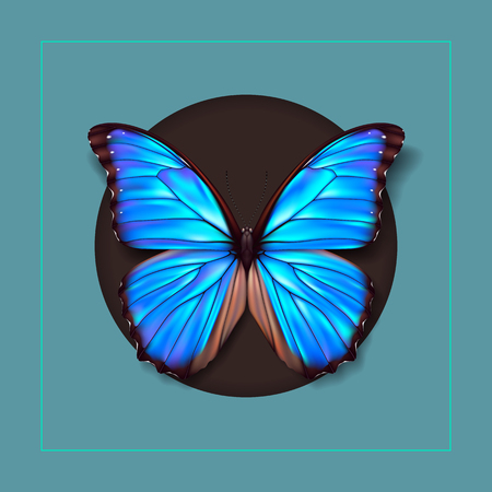 Realistic picture butterfly Morpho Didius.