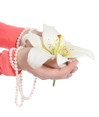 lily in a beautiful female palms. Isolated on white background photo