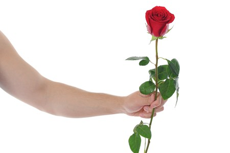 beautiful red rose with dew drops in the hand of man.  isolated on white background Stock Photo - 7983466