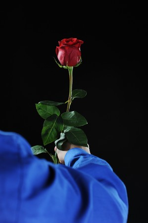 beautiful red rose with dew drops in the hand of man. photo