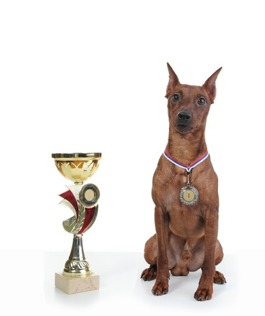 image of a Miniature Pinscher. Isolated on white background Stock Photo - 8355429