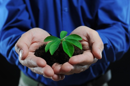 Green sprout in the mens hands on a black background photo