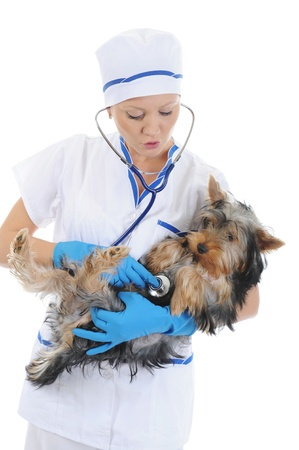 Veterinary with a dog for a review Stock Photo - 8734602