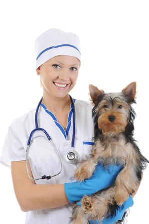 Veterinary with a dog for a review Stock Photo