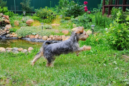 dog playing in the park Stock Photo - 10477448