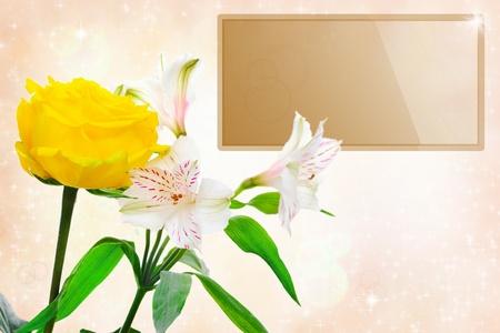 Beautiful white rose flowers photo