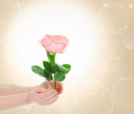 Beautiful pink rose flowers photo