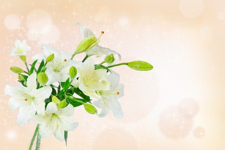 Beautiful white lily flowers Stock Photo