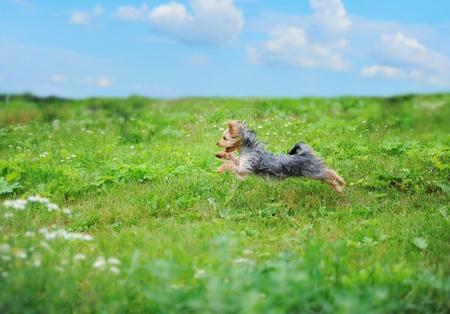 dog days: perro jugando en el parque
