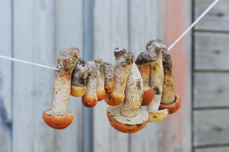mushrooms hanging on the rope photo