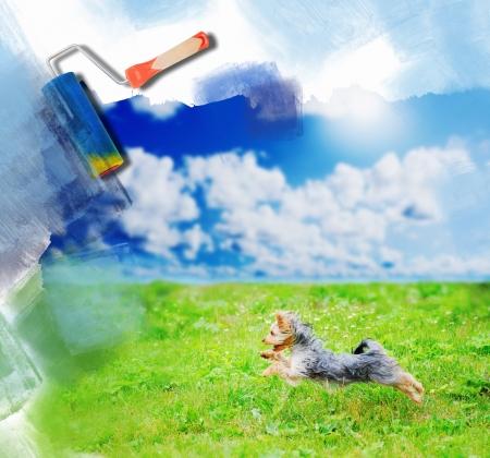 lap dog: Cheerful little dog