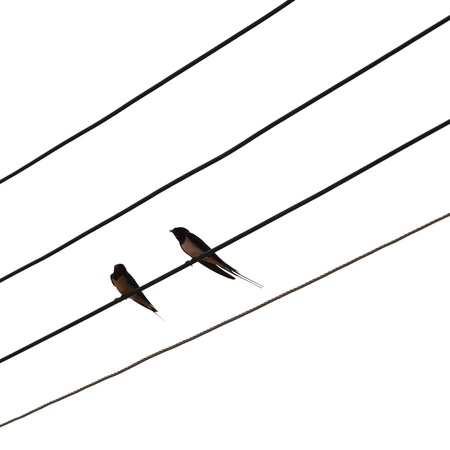 Bird on the electric wires  Stock Photo - 18617845
