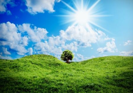 Green grass against a blue sunny sky