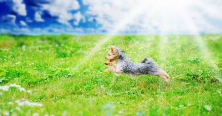 terrier: Cheerful little dog