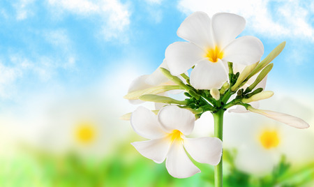 Beautiful image of flowers on a light background photo