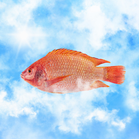 red fish: Red fish in the clouds flying south Stock Photo