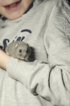 Small grey hamster in the hand of a boy. Friendship of a domestic pet and a kid concept. Wooden table is on the background. Imagens